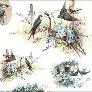 Zwierzęta, ptaki, owady